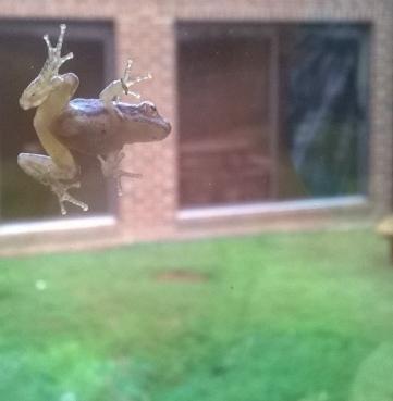 frog window crop